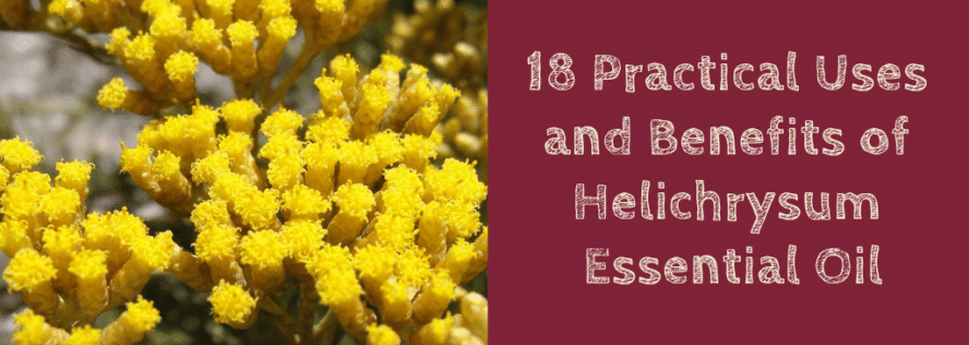 18 Practical Uses and Benefits of Helichrysum Essential Oil