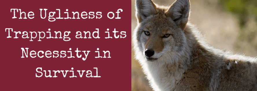 The Ugliness of Trapping and its Necessity in Survival