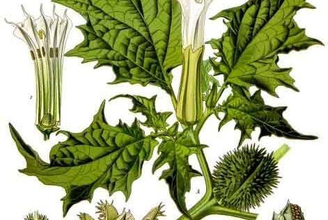 Identifying Poisonous Plants and Mushrooms In America & Treating Poisoning