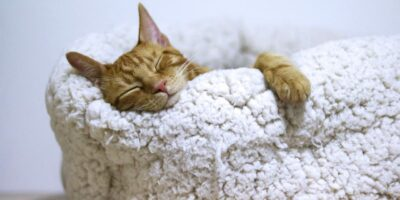 Why Wool Blankets Should Be Part of Your Preps