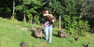 Babydoll Sheep Vs Shetland Sheep For Homesteading