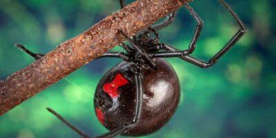 A Look At Venomous Spiders