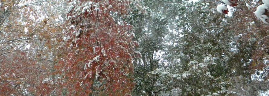 The Winter Warmer: The Best of BDS Winter Preparedness Posts