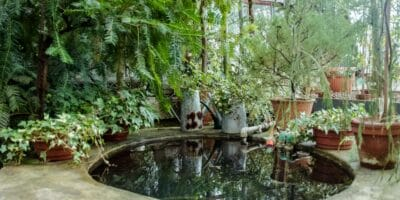 4 Reasons Why You Need A Pond