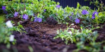 Finding The Best Soil Test Kit