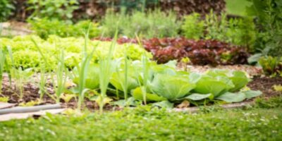 The Best Permaculture Books
