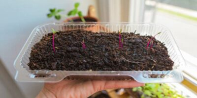 The Best Soil for Microgreens